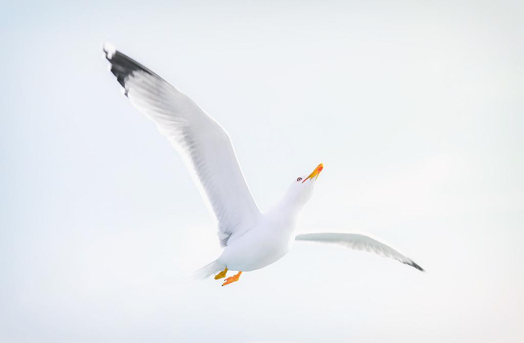 Zwei Flügel der Achtsamkeit